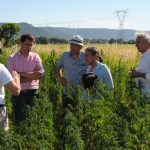 Incontro tecnico in campo in Puglia con Federcanapa ed i produttori francesi di seme